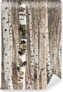 Vinil Duvar Resmi Baharda huş ağaçları