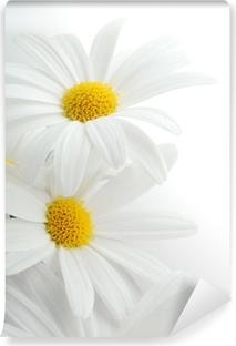 Vinil Duvar Resmi Beyaz bahar marguerite