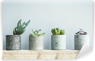 Vinil Duvar Resmi Diy beton tencerede succulents. İskandinav oda iç dekor