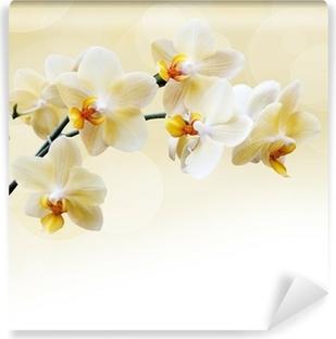 Vinil Duvar Resmi Güzel beyaz orkide