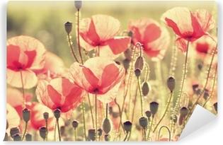Vinil Duvar Resmi Haşhaş Çiçeği