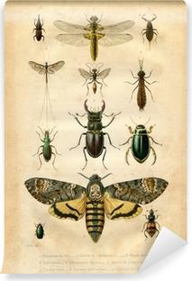 Vinil Duvar Resmi Histoire naturelle: Les insectes