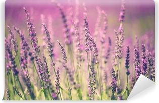 Vinil Duvar Resmi Lavanta Çiçeği