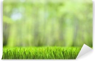Masaüstü Duvar Kağıdı Yeşil çimen Ve Orman Doğa Arka Plan Poster