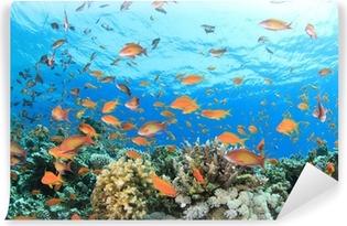 Vinil Duvar Resmi Mercan resif sualtı