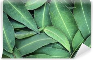 Vinil Duvar Resmi Okaliptus yaprakları tam çerçeve arka plan üstü görünüm