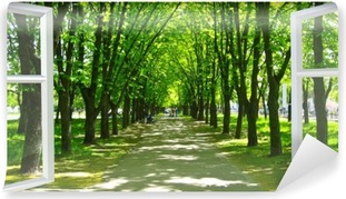 Vinil Duvar Resmi Pencere birçok yeşil ağaçları ile güzel bir park açıldı