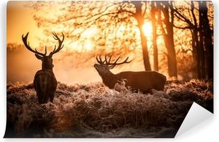 Vinil Duvar Resmi Sabah güneşin kızıl geyik