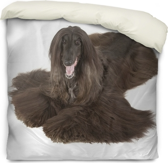 Afghan Hound Poster Pixers We Live To Change