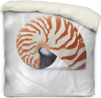Nautilus Shell Isolated On White Background Sticker Pixers We Live To Change