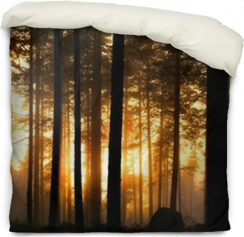 Sunset In Foggy Forest Poster Pixers We Live To Change