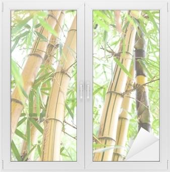 Fensteraufkleber Bamboo forestp