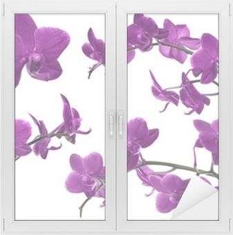 Leinwandbild Rosa Dekoration Mit Orchidee Blume Rahmen U2022 Pixers®   Wir  Leben, Um Zu Verändern