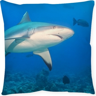f433aed7644c grey white shark jaws ready to attack underwater Wall Mural • Pixers® • We  live to change