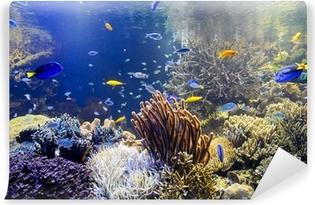 Vinyl Fotobehang Aquarium