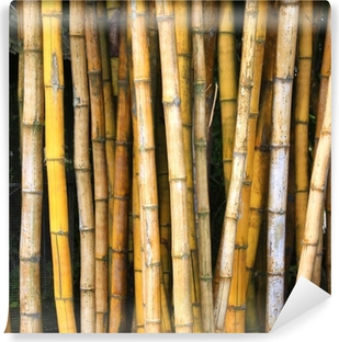 Vinyl Fotobehang Bamboo