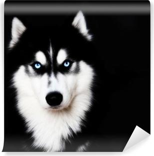 Vinyl Fotobehang Close-up op de blauwe ogen van een hond Siberische husky