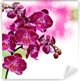 Vinyl Fotobehang Close-up van de orchidee bloem
