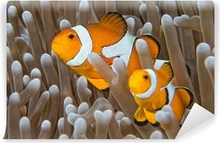 Vinyl Fotobehang Clown vis, terwijl op zoek naar jou van anemoon