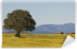 Vinyl Fotobehang Dehesa Extremadura, Extremadura (Spanje)