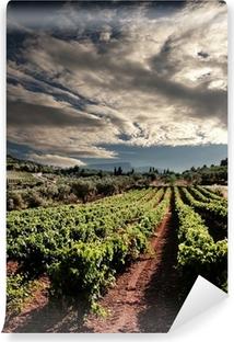 Vinyl Fotobehang Dramatische hemel op rijen wijnstokken