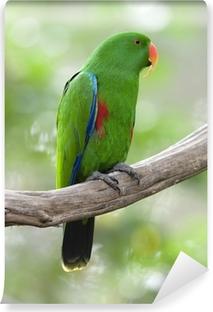 Vinyl Fotobehang Eclectuspapegaai mannelijke groene vogel, indonesië