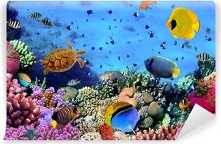 Vinyl Fotobehang Foto van een koraal kolonie