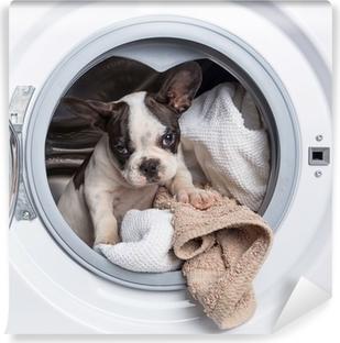 Vinyl Fotobehang Franse bulldog puppy in de wasmachine