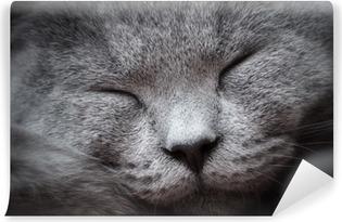 Vinyl Fotobehang Gezicht close-up van een jonge schattige kat slaapt zalig. De Brits Korthaar