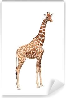 Vinyl Fotobehang Giraffe tot het uiterste. Het is geïsoleerd op de witte