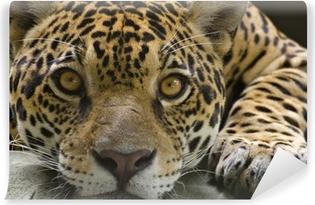 Vinyl Fotobehang Grote kat jaguar te kijken naar de camera