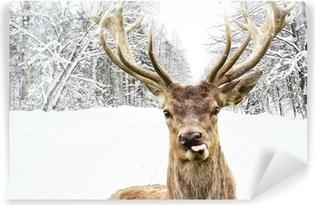 Vinyl Fotobehang Herten met mooie grote hoornen op een winterse landweg