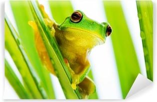 Vinyl Fotobehang Kleine groene boomkikker vasthouden palmboom