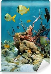 Vinyl Fotobehang Kleurrijke onderwater landschap met koralen en sponzen