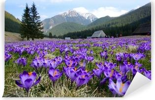 Vinyl Fotobehang Krokussen in Chocholowska vallei, Tatra-gebergte, Polen