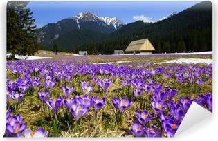 Vinyl Fotobehang Krokussen in Chocholowska vallei, Tatra, Polen