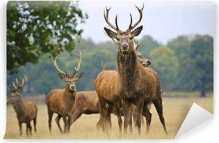 Vinyl Fotobehang Kudde edelherten herten en doet in de herfst Herfst weide