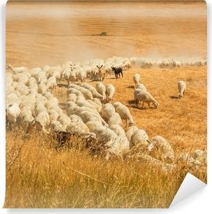 Vinyl Fotobehang Kudde schapen in een veld van Toscane