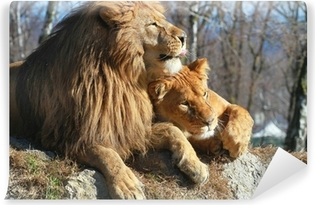 Vinyl Fotobehang Leeuw en leeuwin