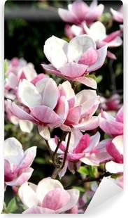 Vinyl Fotobehang Magnolia voorjaar bomen in bloei