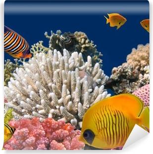 Vinyl Fotobehang Onderwater leven van een hard-koraalrif, Rode Zee, Egypte