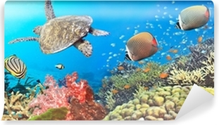 Vinyl Fotobehang Onderwater panorama