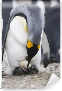 Vinyl Fotobehang Pinguïn met ei