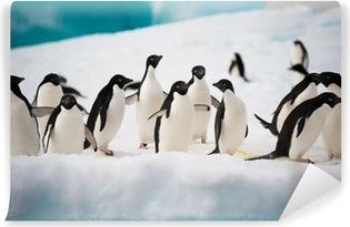 Vinyl Fotobehang Pinguïns op de sneeuw