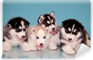 Vinyl Fotobehang Puppies van husky