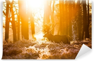 Vinyl Fotobehang Red Deer in de ochtend zon.