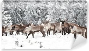 Vinyl Fotobehang Reindeer