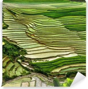 Vinyl Fotobehang Rijstveld op terrasvormige in berg.