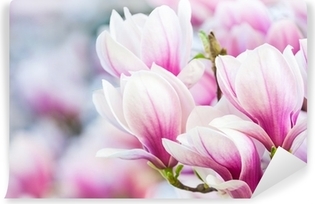 Vinyl Fotobehang Roze bloem magnolia