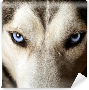 Vinyl Fotobehang Sluit het oog op de blauwe ogen van een husky of Eskimo hond.